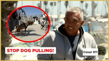 Stop Aggressive Dog from Pulling on the Leash! (Cesar911 Shorts)