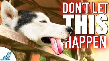 What You NEED To Know To Protect Your Dog From Heat Stroke