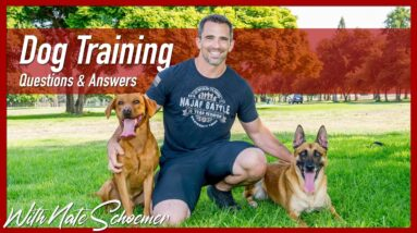 Dog Training Tips and Tricks | Q&A With Professional Dog Trainer Nate Schoemer | Part 5