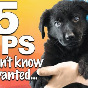 5 Important Puppy Care Tips That Most People FORGET!
