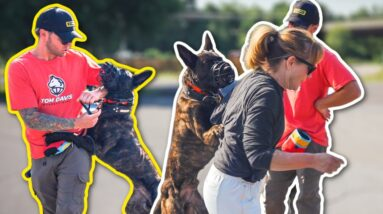 AGGRESSIVE DUTCH SHEPHERD ATTACKS ME AND HIS OWNER