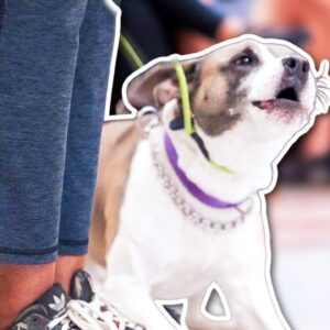 HOW TO STOP YOUR DOG BEING AGGRESSIVE ON LEASH!