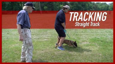 How to Teach Your Dog a Straight Track