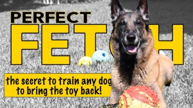 Train ANY Dog to Play Fetch Perfectly - Dog Training Video by Robert Cabral