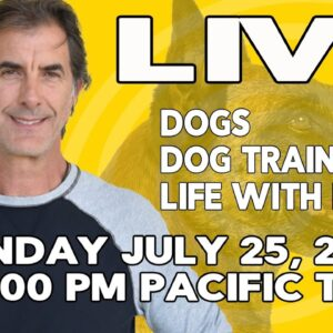 LIVE with Robert Cabral Dog Training