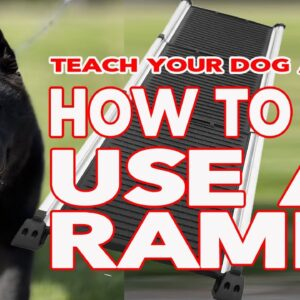 Teach Your Puppy Dog How to Use a Ramp - Senior Dogs and Young Puppies