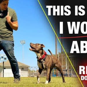 THESE Are the Issues to Worry About!!!  [REALITY DOG TRAINING]