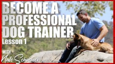Become a Professional Dog Trainer. Lesson 1 - Terminology
