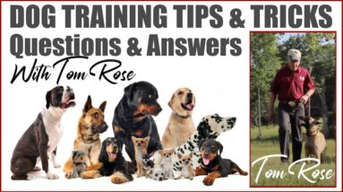 Dog Training Tips and Tricks | Q&A With Professional Dog Trainer Tom Rose