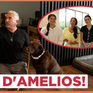 Dog Training Tips with the D'Amelios! (with Cesar Millan!)