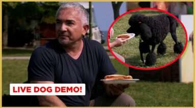 How To Stop Your Dog From Stealing Food! (Live Dog Demo)