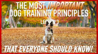 The Most Important Dog Training Principles.