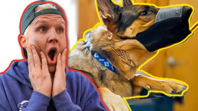 AGGRESSIVE GERMAN SHEPHERD TRIES TO BITE MY FACE!