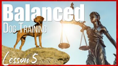 Become a Professional Dog Trainer | Lesson 5 | Balanced Dog Training