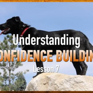 Confidence Building, Counterconditioning and Desensitization. Lesson 7