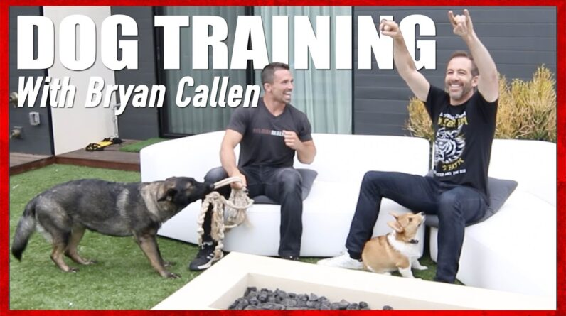 Dog Training with Bryan Callen and Nate Schoemer