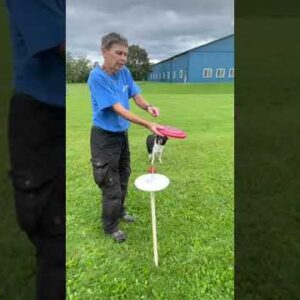 Frisbee Throwing Tips From A 5X World Champion Of Disc Dog #Shorts