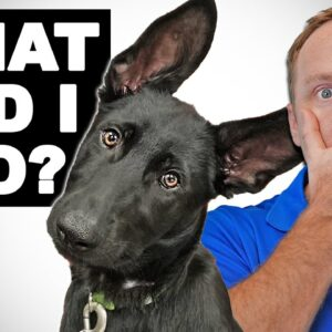 Getting A Second Dog? Don't Make The Same Mistake I Did!