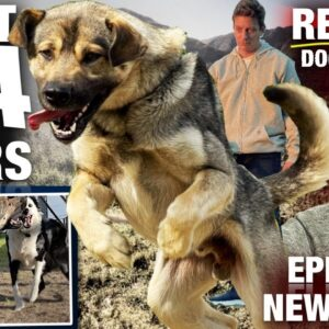 My First 24 HOURS with the WILDEST UNTRAINED DOG I've Ever Lived With [Reality Dog Training  EP 1]