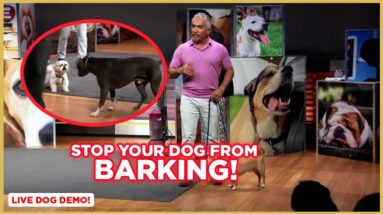 How to Stop Your Dog From Barking w/ Cesar Millan! (Dog Nation Shorts)