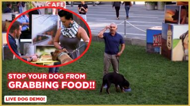 How To Stop Your Dog From Grabbing Food! (Dog Tips with Cesar Millan)