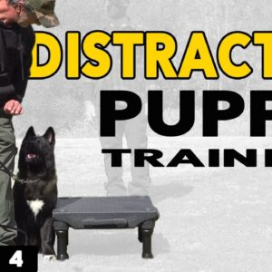 How to Train a Distracted Puppy