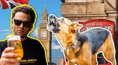 HE STRUGGLED WITH HIS DOG FOR 3 YEARS UNTIL... Tom Davis trains dogs in the UK!