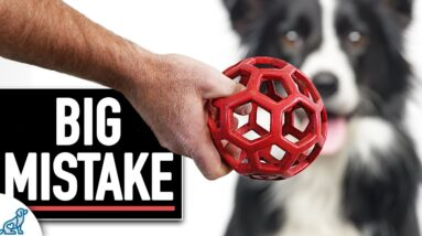 The Dog Training Mistakes People Make When Using Toy Rewards!